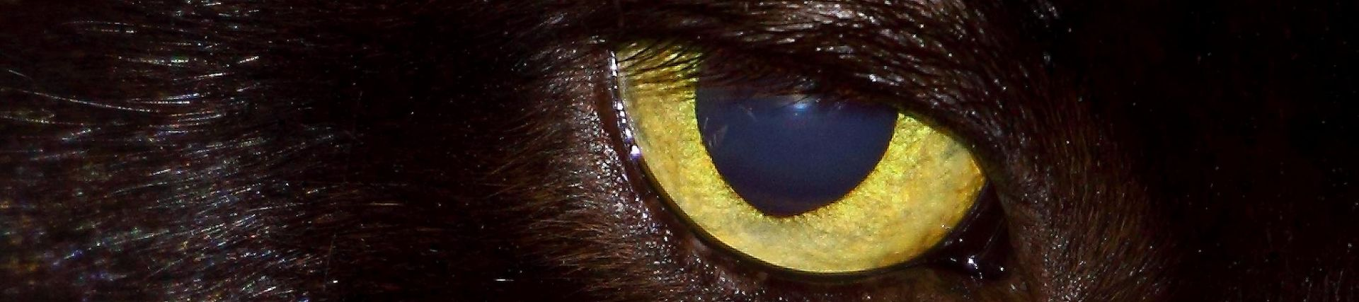 Image of a cat's eye