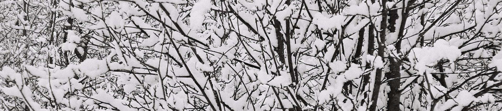 An image of some trees in the snow